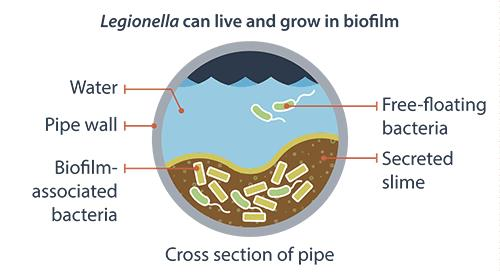 Why should we care about biofilm? | Cogency